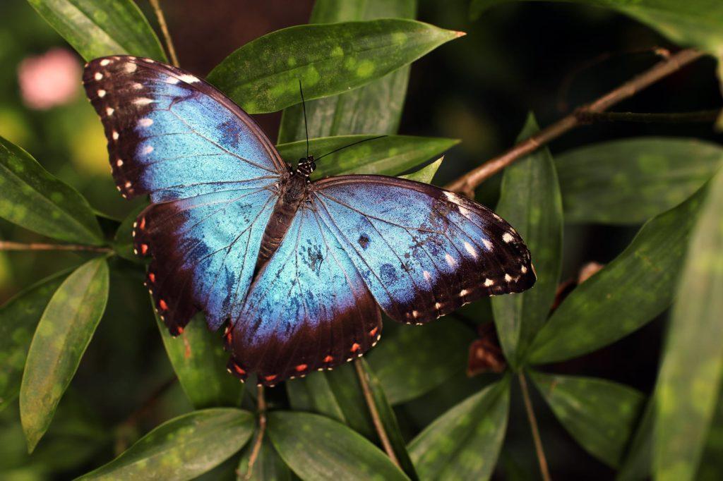 25 θετικές δηλώσεις για τη μεταμόρφωσή σας